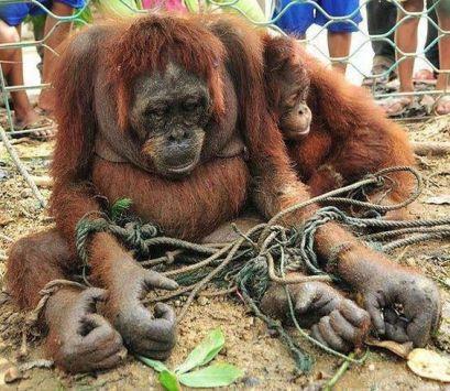 palmoilorand death