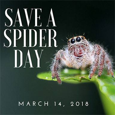save spider daypng