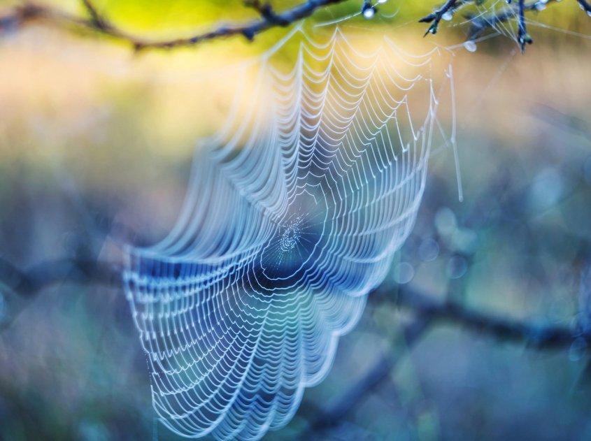 spinnen-nutzen-t