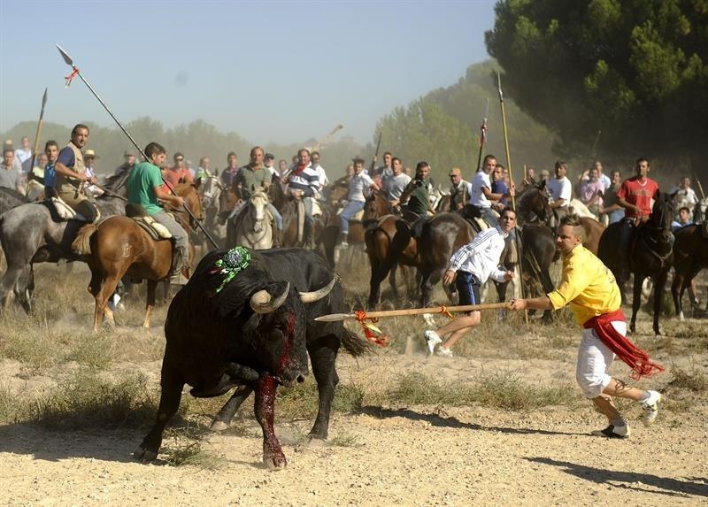 Toro de la Vegag