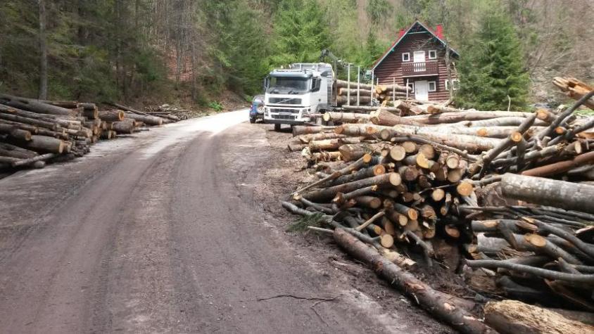 Waldzerstörung in Rumänienpg