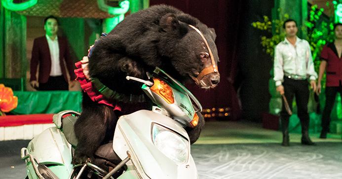 Bär auf Motorrad pg