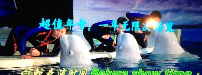 belugas free