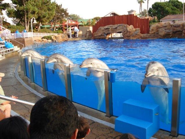 dolphn captivity 1