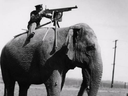 elephant machine gun