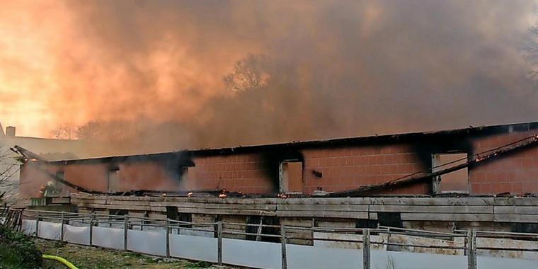 Feuer-in-Schweinestall-60-Muttersauen-und-600-Ferkel-verbrannt_jpg