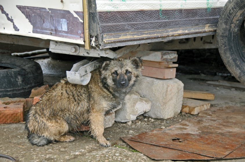 hund in Moldawienjpg