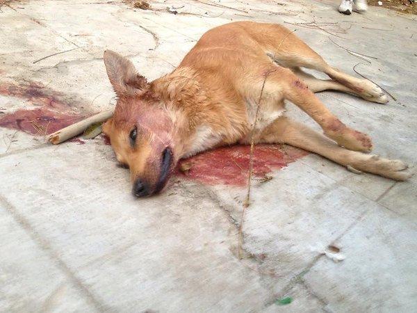 hundemassaker-Catania-Italia21-jpg