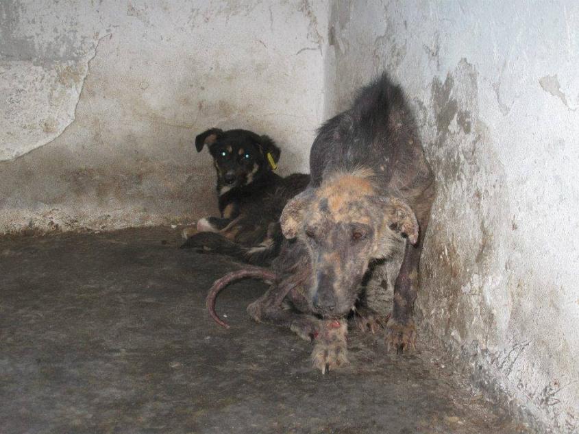 shelter in Rumänienjpg
