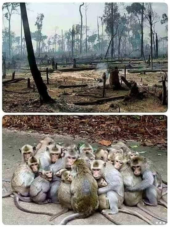 Affen in zerstörtem Wald n