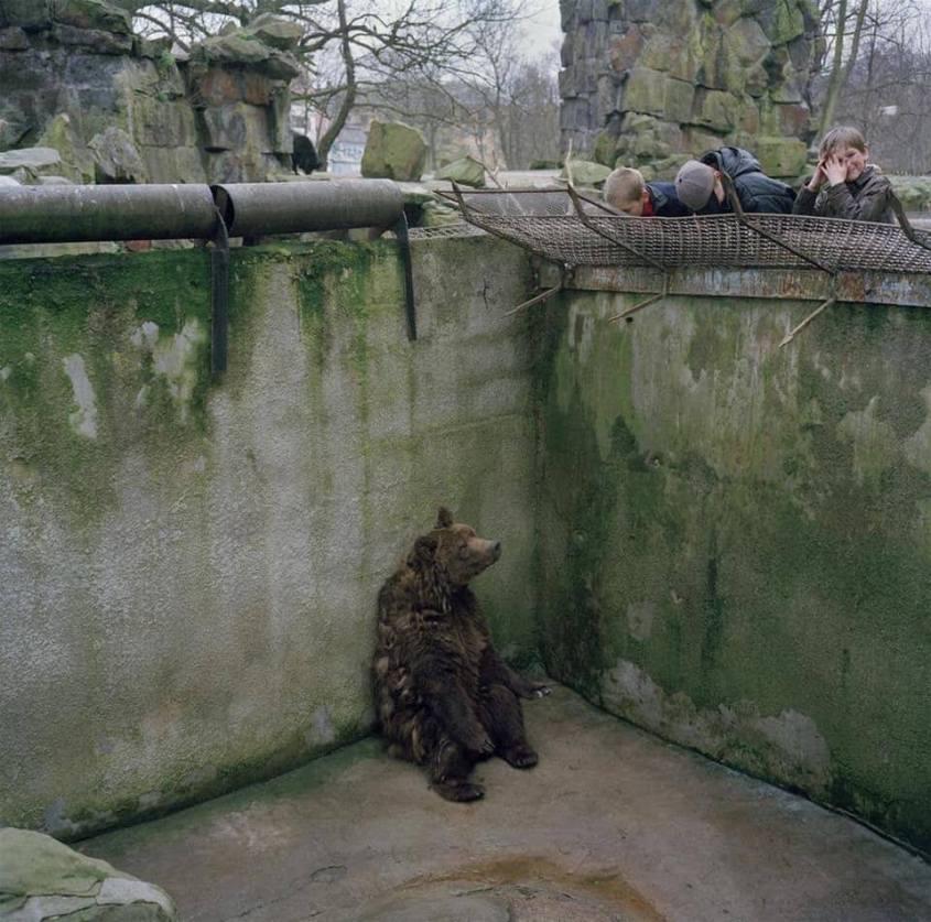 Bär im Zoo pg