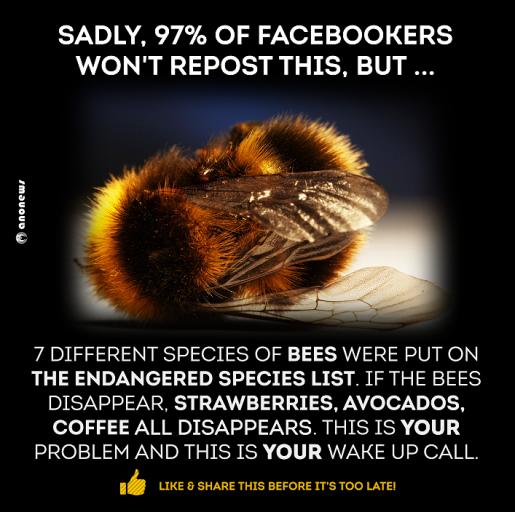bee warning.png