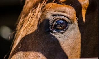 can horses 2