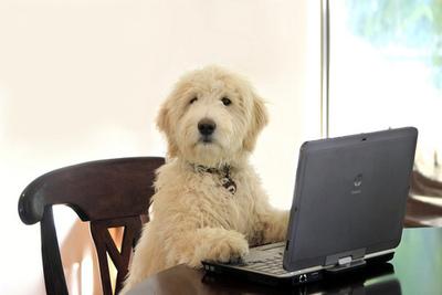 Dog at comp 3