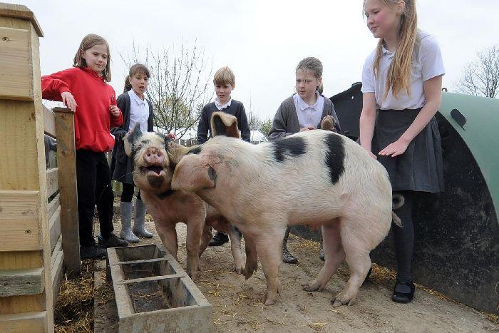 kinder und zwei schweine pg