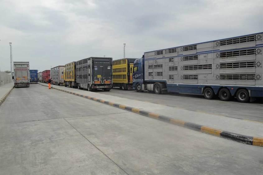 Tiertransporte-Warteschlange-Zoll-BIGA-TTEX