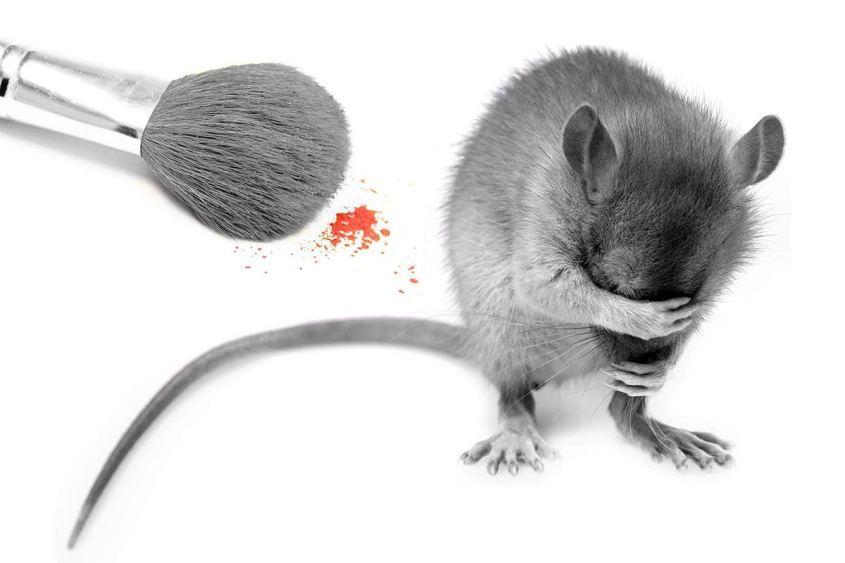 Tierversuche-Kosmetik-Maus-Pinsel