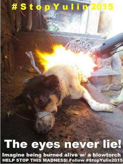 yulin eyes never lie