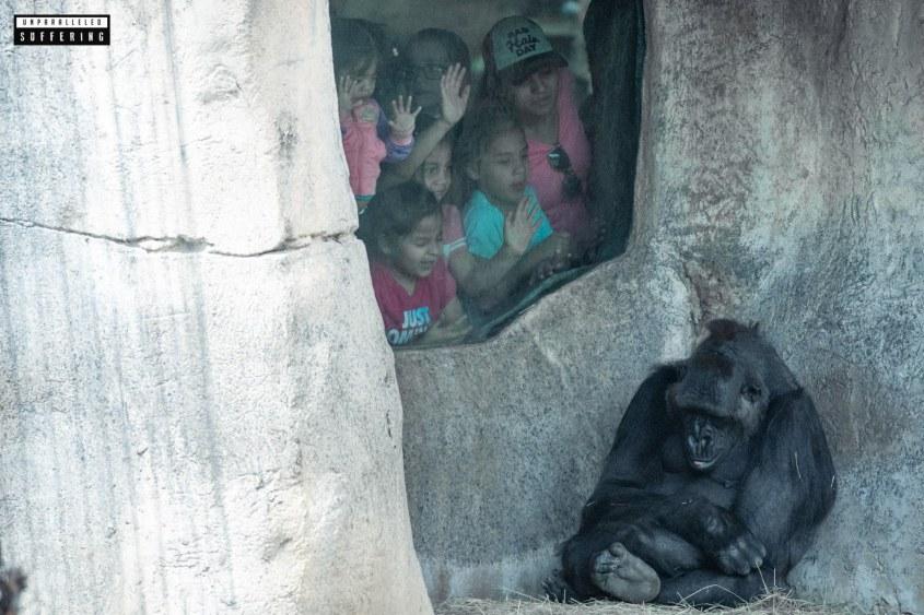 Afe im Zoo und Scheiß Kinder um ihnjpg