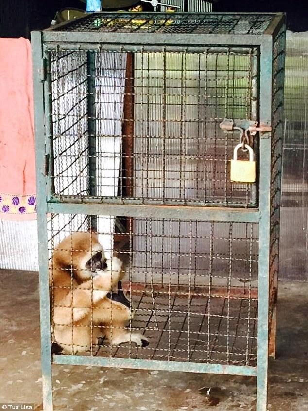Affen gefangen in Thai Zoo jpg