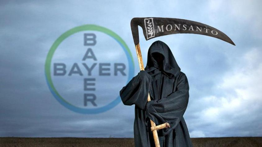 bayer monsantopg