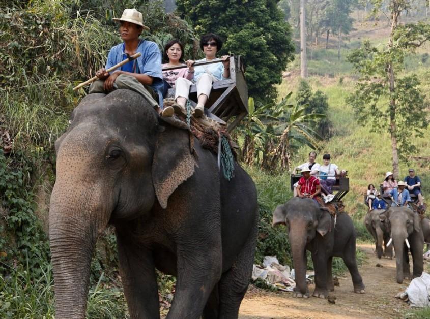 bei-touristen-sind. elefantenjpg