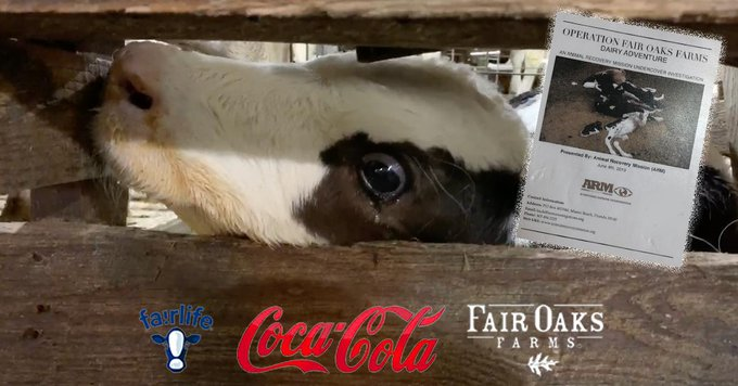 Coca-Cola Fair Oaks Farms777
