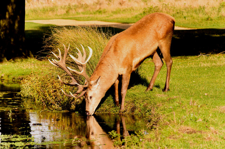 deer-pg