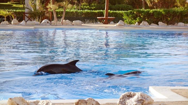 Im Urlaub kein Tierleid unterstützen: Delfinarien meiden
