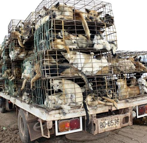 hundetransporte in chinapg