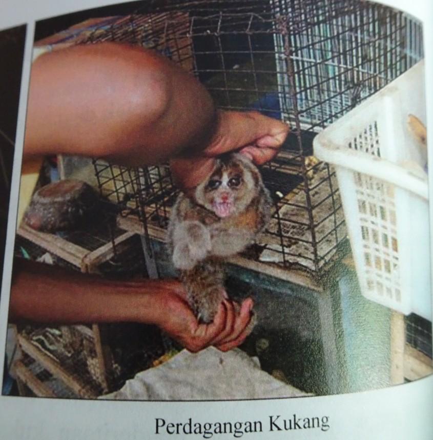 illegaler-wildtierhandel.jplumpori pg