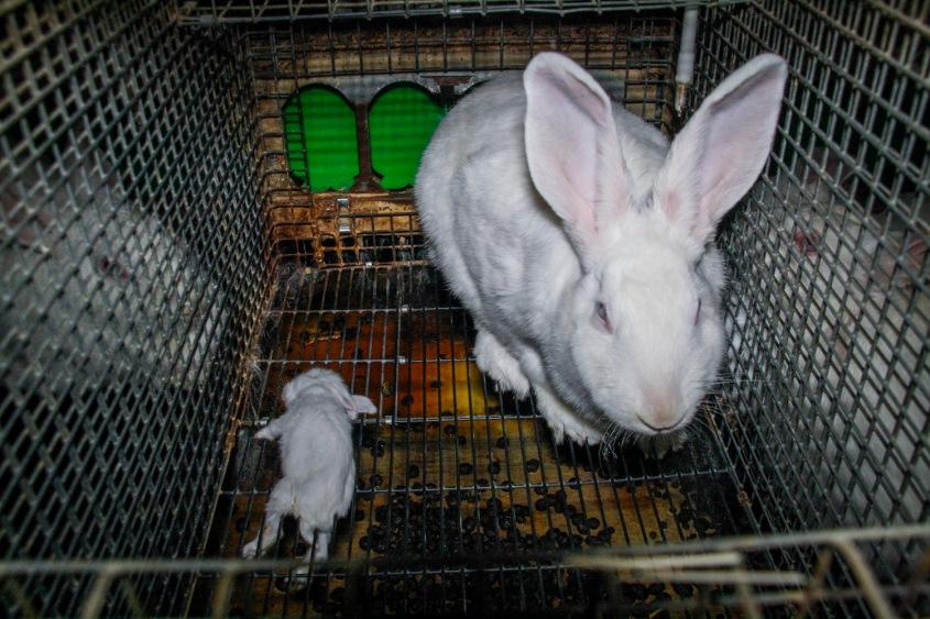 kaninchen-tierretter-de-allgemein-13