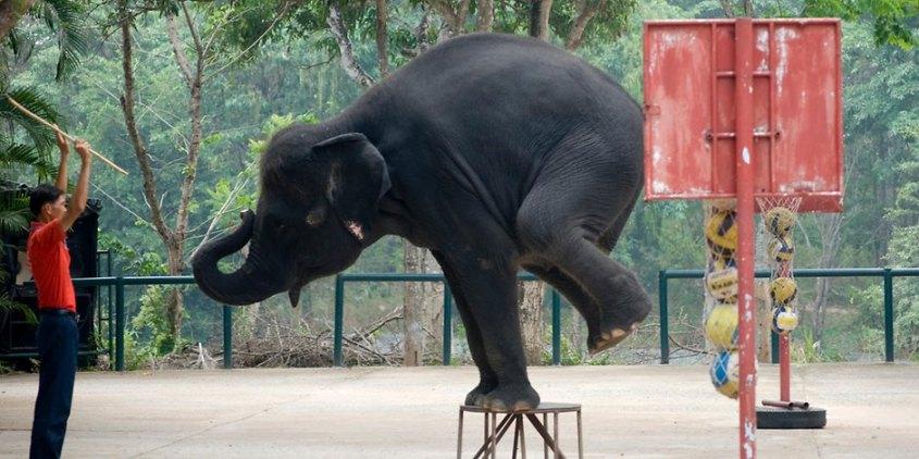 problem-elephant-4