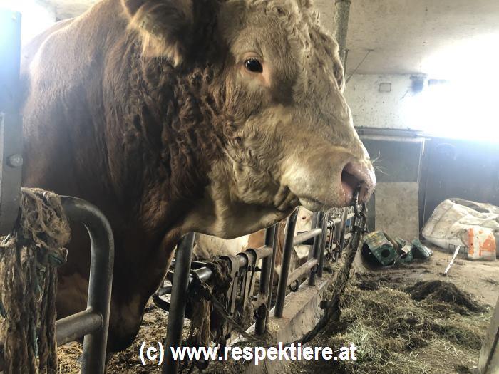 ställe in Austria 1