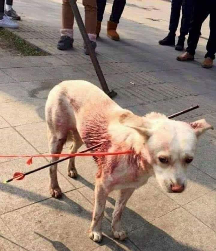 streuner Hund mit Pfeilen aus Spanienn