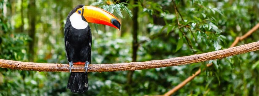 animals-in-brazils-amazon-rainforest