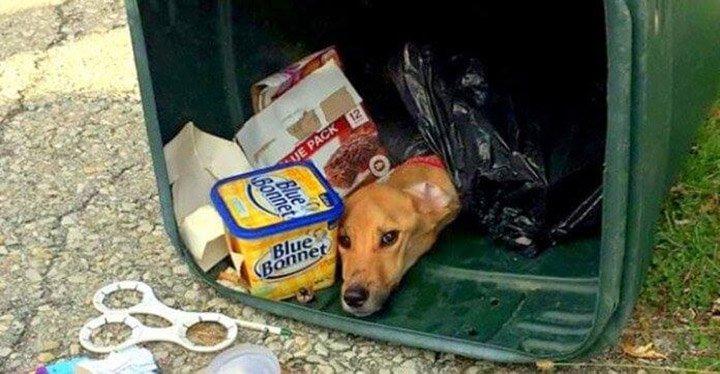 hund im Mülln