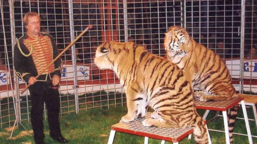 muss-nicht-immer-tiger-sein