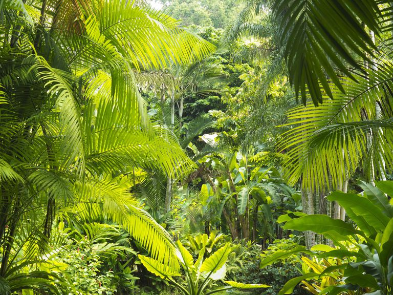 rainforest 2