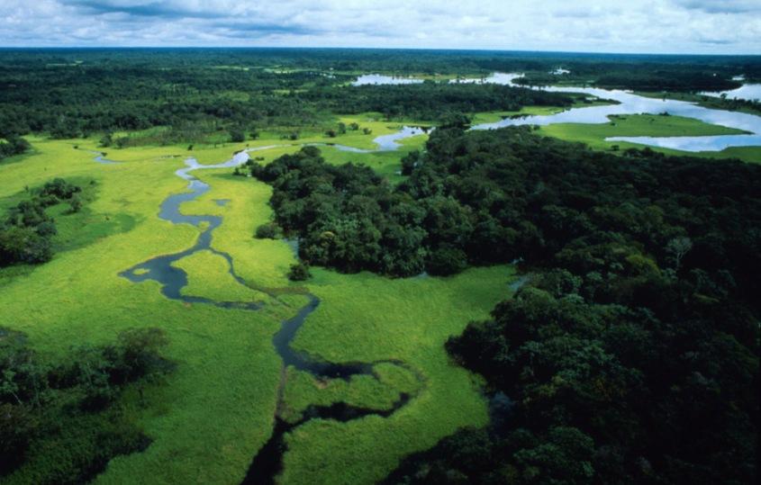 regenwald amazonasjpg