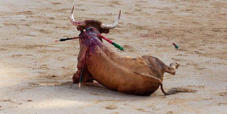 Stier allein sterbend