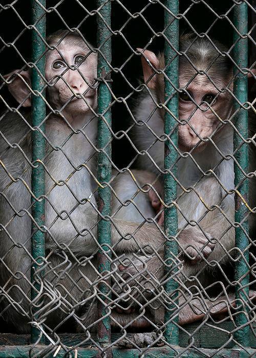 Zoo Giza pg