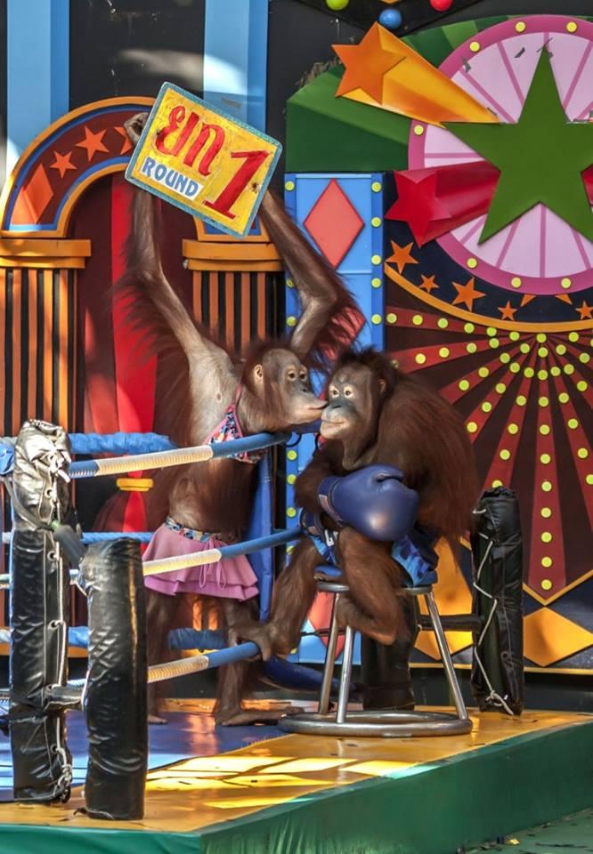 Affen in Zirkus_n