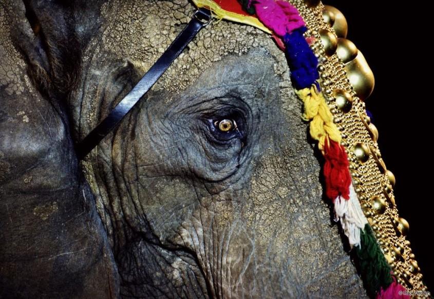 Circus-Krone--Elefant-Auge-
