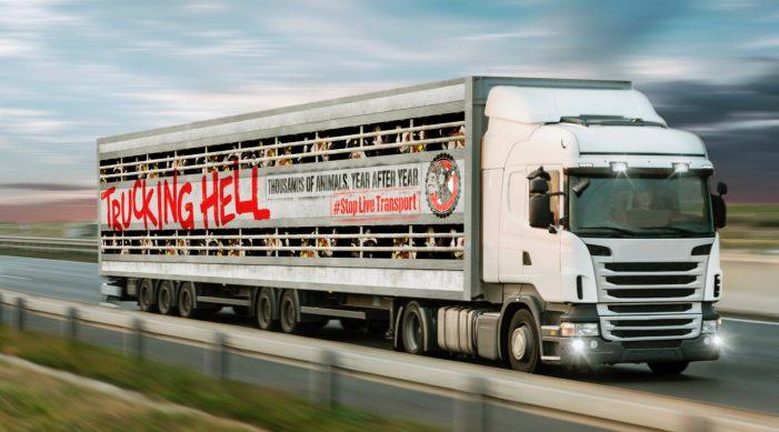 CIWF Trucking hell