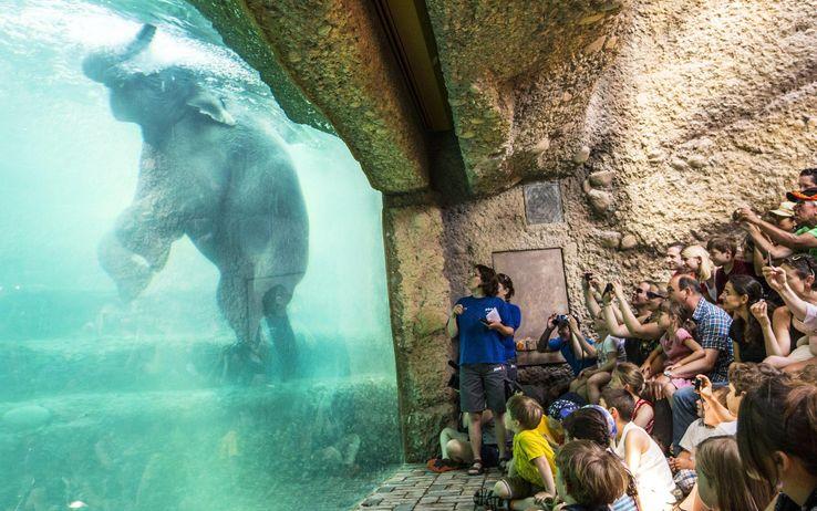 elephant unter wasser