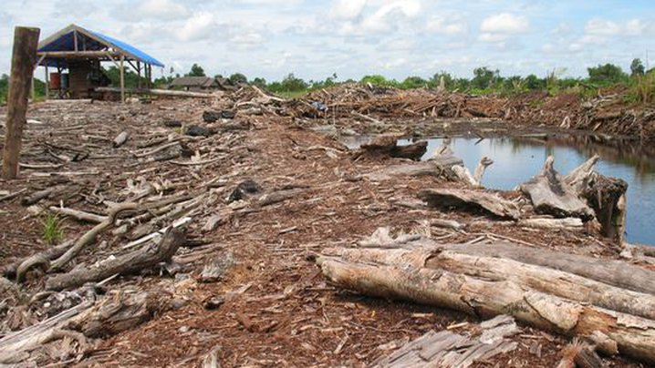 gerotteter Wald für Palmöl
