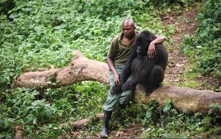 Gorilla und sein chützer_n