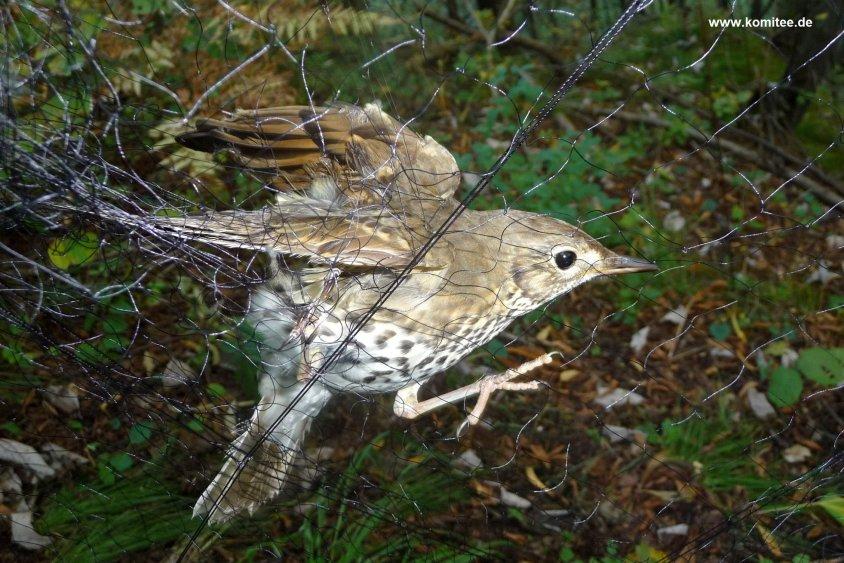 vogel im Falleo