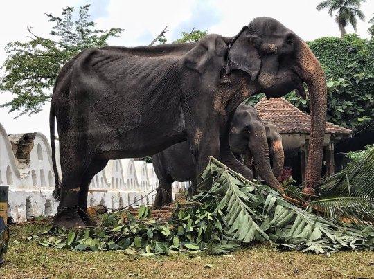 abgemagerter elefant jpg